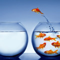 Customer Loyalty Fish Bowl